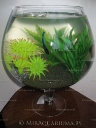 aquarium-goblet-ai-01