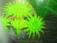 aquarium-goblet-ai-03