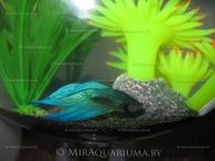 aquarium-goblet-ai-04