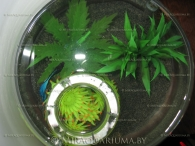 aquarium-goblet-ai-06