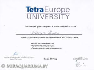 Фото сертификата участника семинара компании Тетра