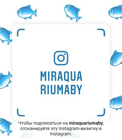 Instagram-визитка MirAquariumaBY